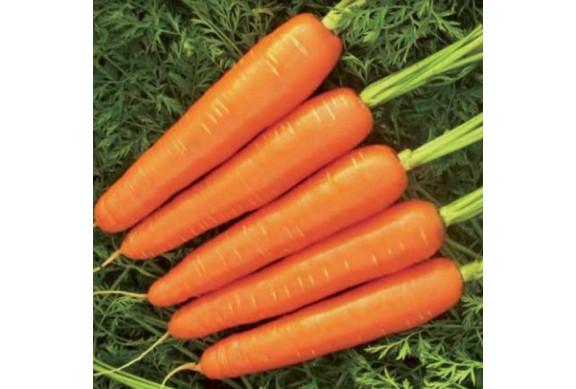 Bobine de carotte (25m)